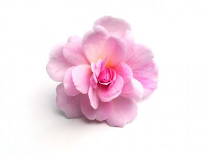 Rose de Damas.